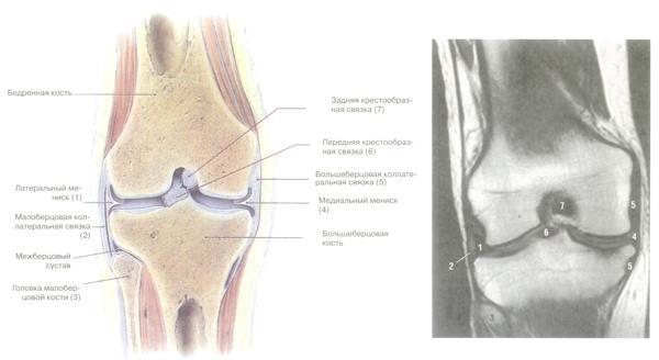 лечение артроза коленного сустава народными средствами - Сумки.